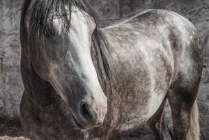 pferdenamen mit d